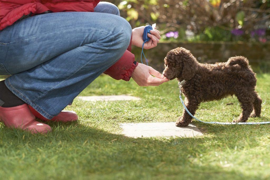 Hond belonen tijdens clickertraining