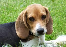 Oogcontact met puppy