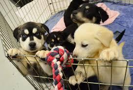Puppys met speeltouw