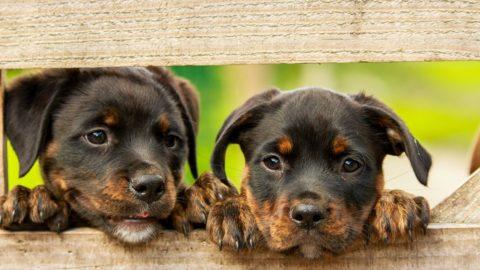 Puppy bijten afleren [uitleg en tips]