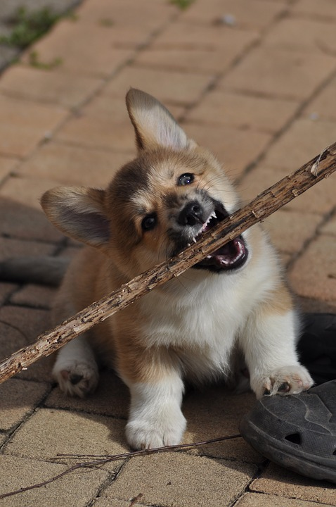 Puppy bijt in stok
