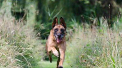 Hond leren loslopen [met extra tips]