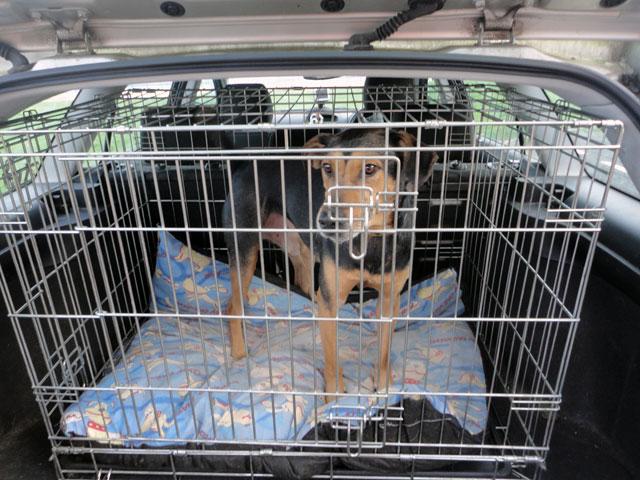 reisbench voor honden