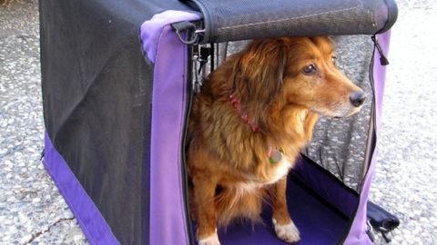 Top 6 beste hondenbenches [inclusief maattabel]