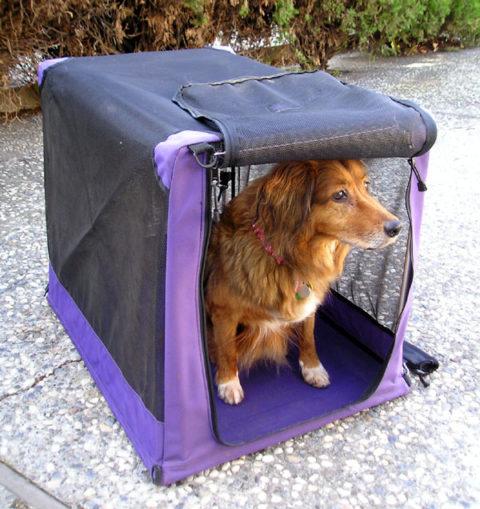 Top 3 beste hondenbenches [inclusief maattabel]
