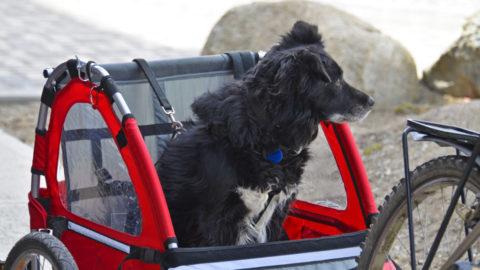 Beste hondenfietskarren (voor kleine en grote honden)