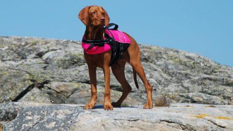 Hondenzwemvesten kopersgids: kleine en grote maten
