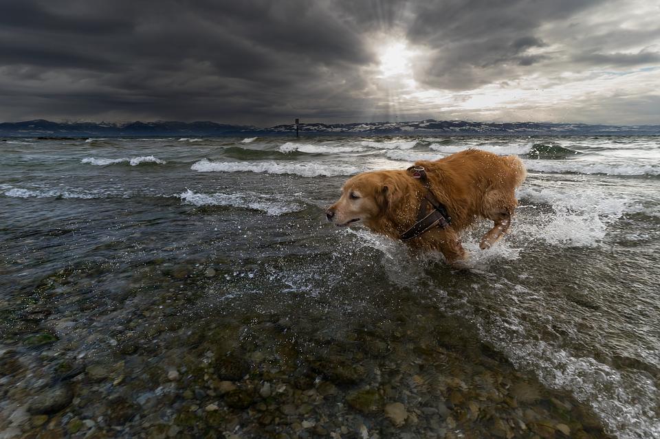 Hond loopt uit water