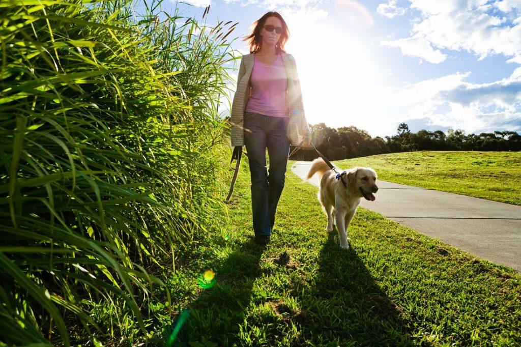 Hond loopt zonder trekken