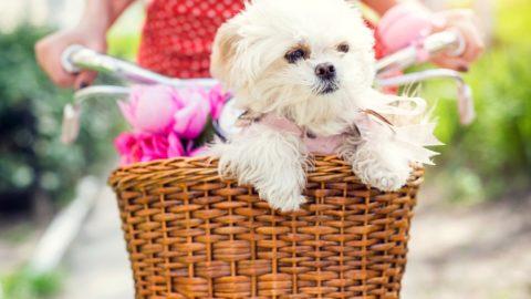 Hondenfietsmand: 4 soorten vergeleken [kopersadvies]