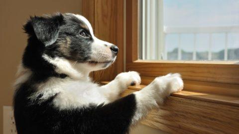 Hond alleen leren zijn: verlatingsangst