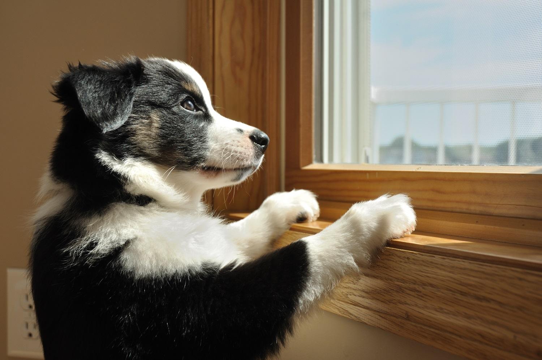 Puppy met verlatingsangst