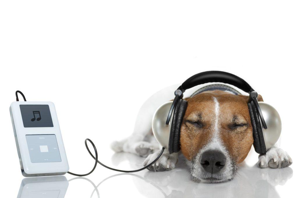 Hond laten wennen onweer geluid