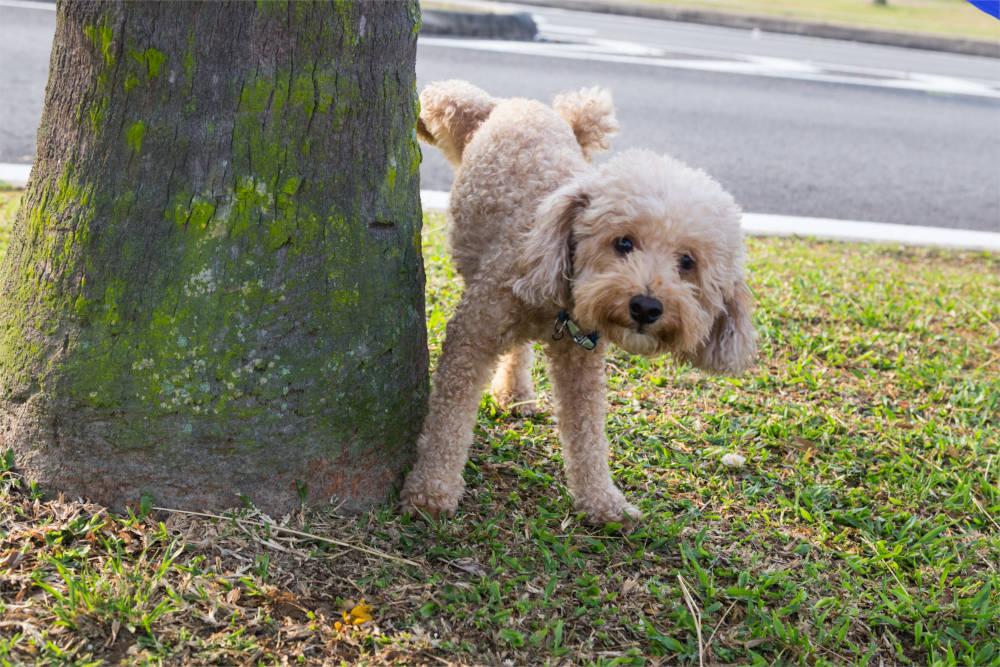Hond plast tegen boom