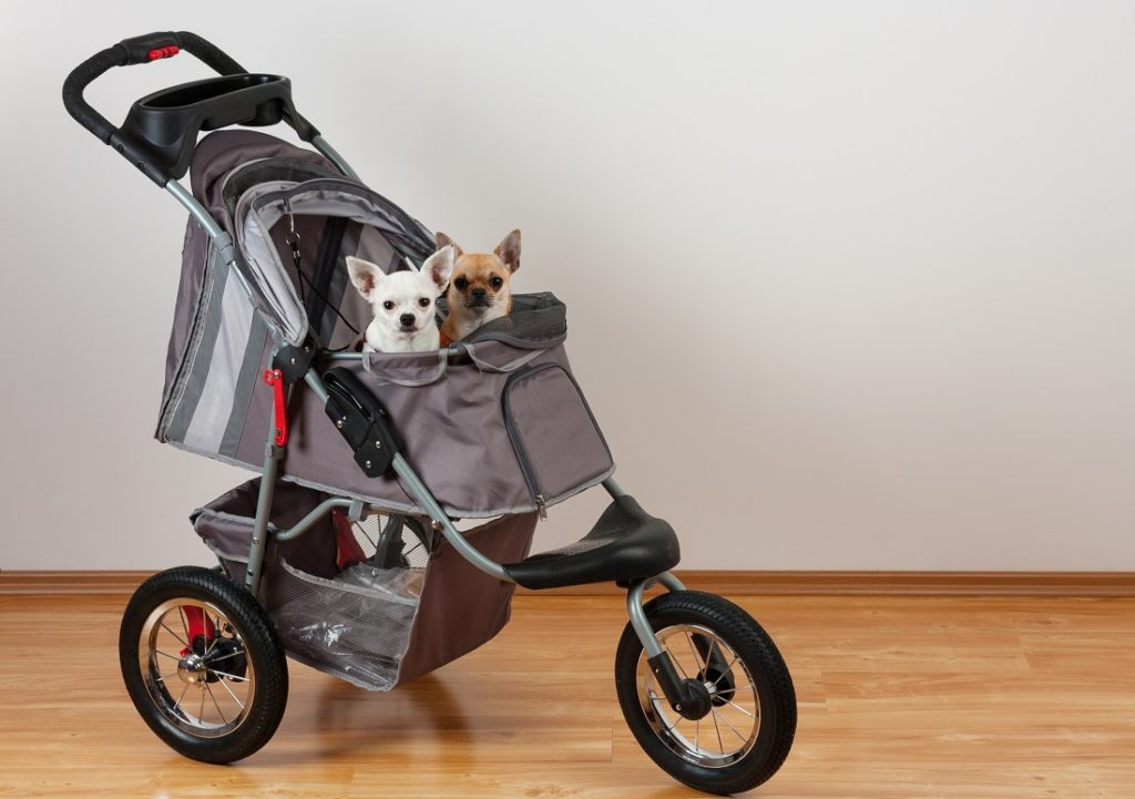 Chihuahua in hondenbuggy