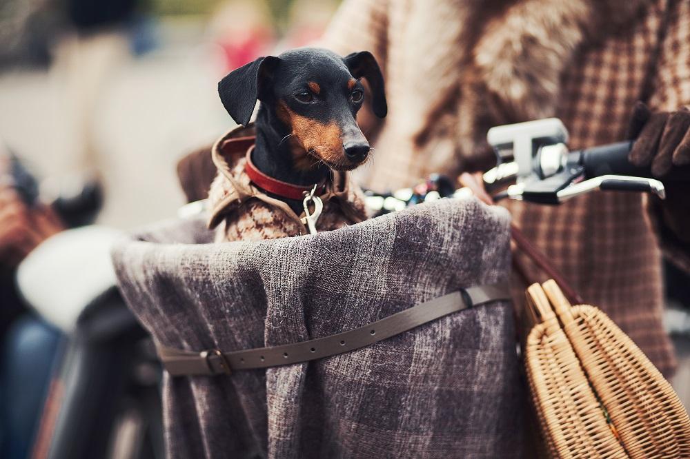 Kleine hond op de fiets