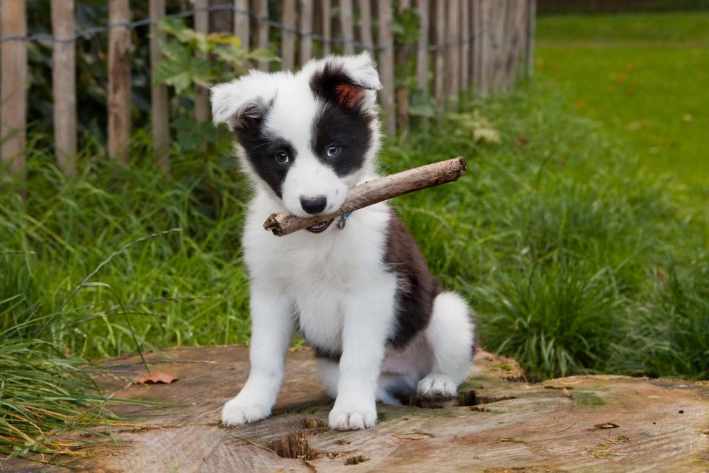Puppy leert plassen