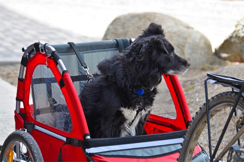 Hond in fietskar