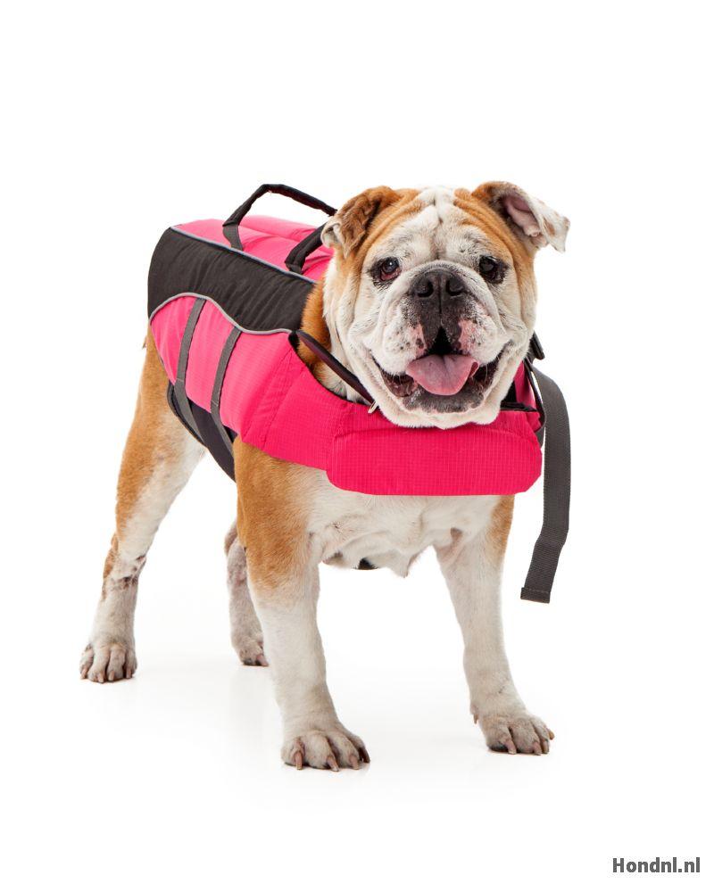 Hond in hondenzwemvest