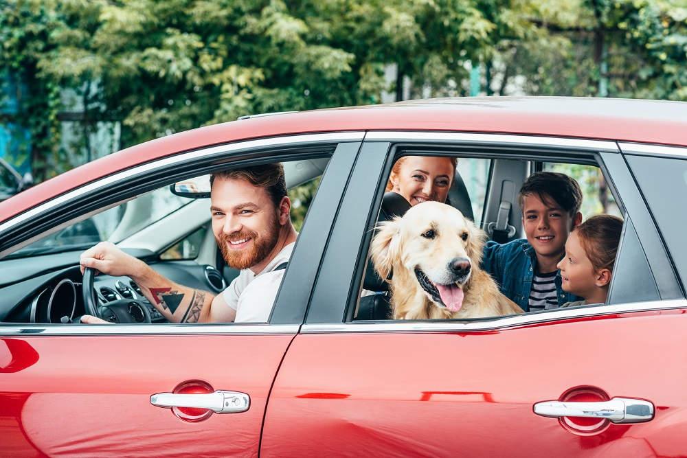 Gezin met hond in auto
