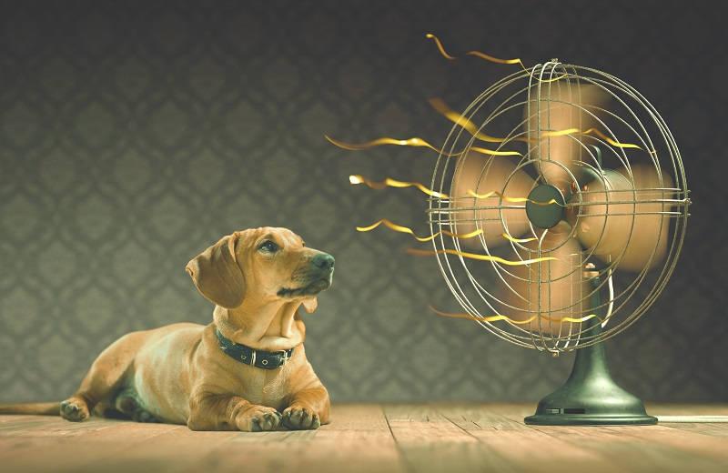 Hond voor ventilator