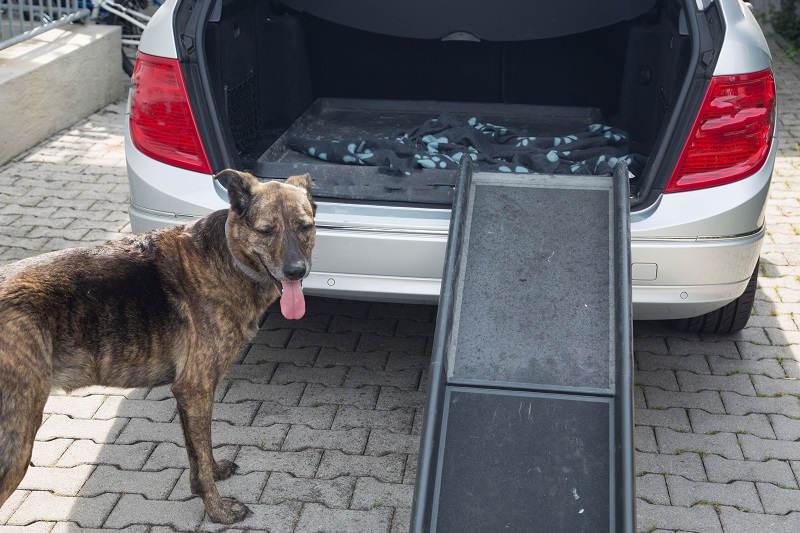 Hond bij loopplank auto