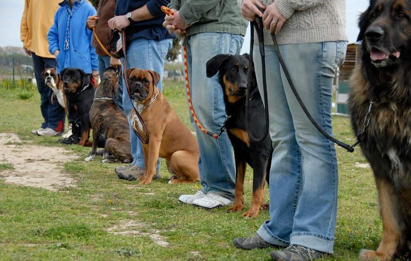 Honden tijdens training