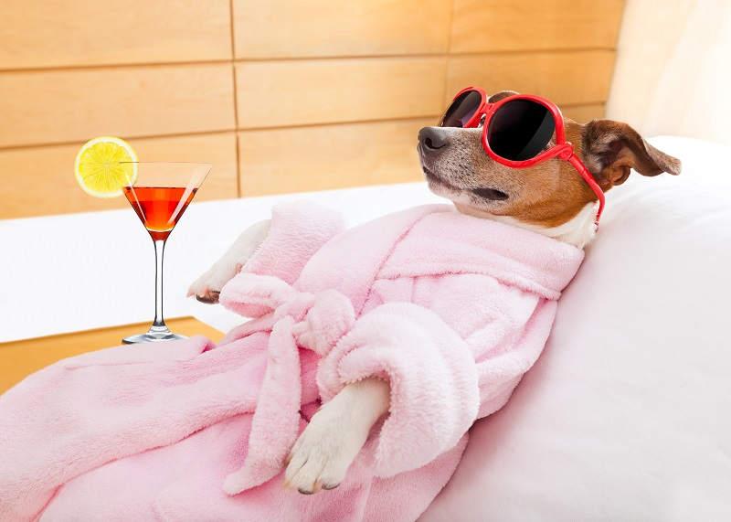 Hond in badjas