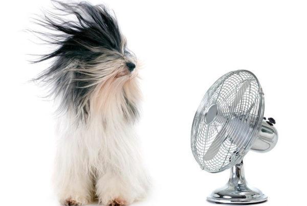 Hond verkoeling ventilator