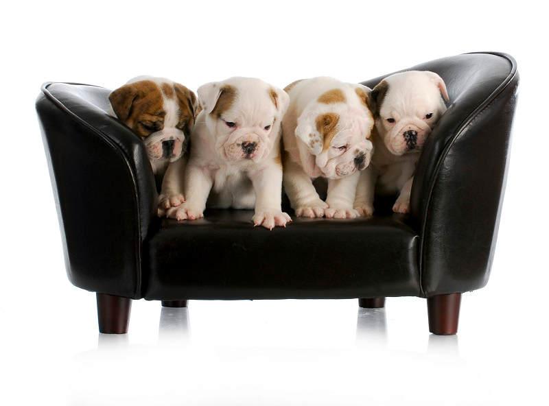 Puppies op hondenbank