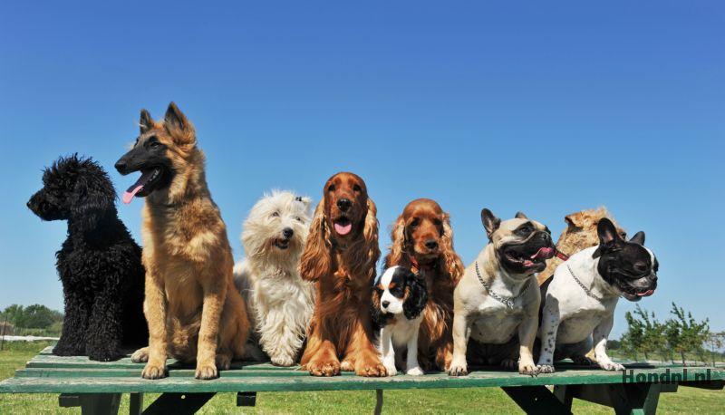 9 soorten honden