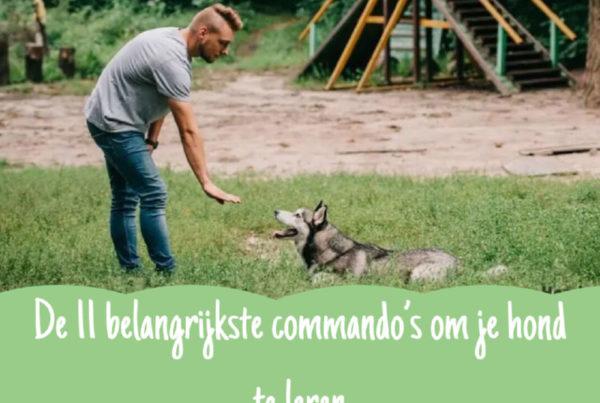 Commando's hondentraining