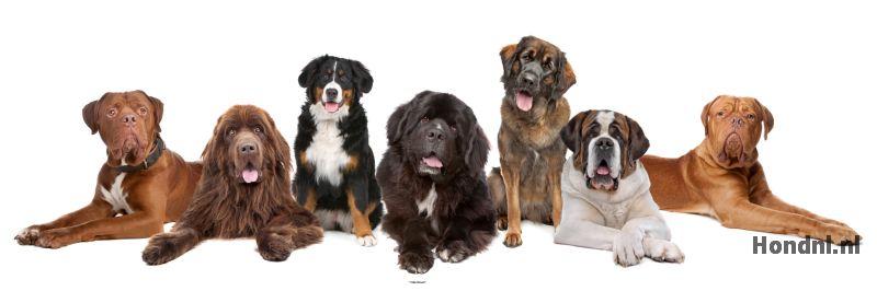 Grote hondenrassen