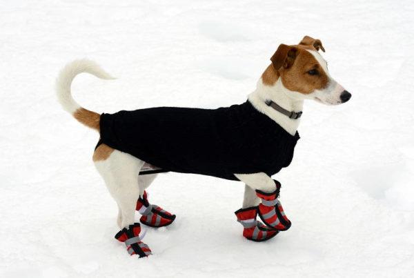 Hond met schoenen