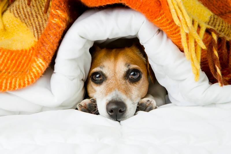 Lief hondenkussen bed