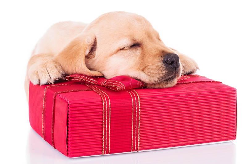 Puppy op pakket