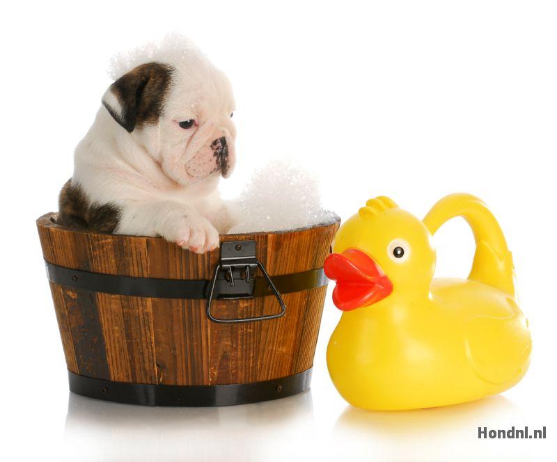 Hond en badeend