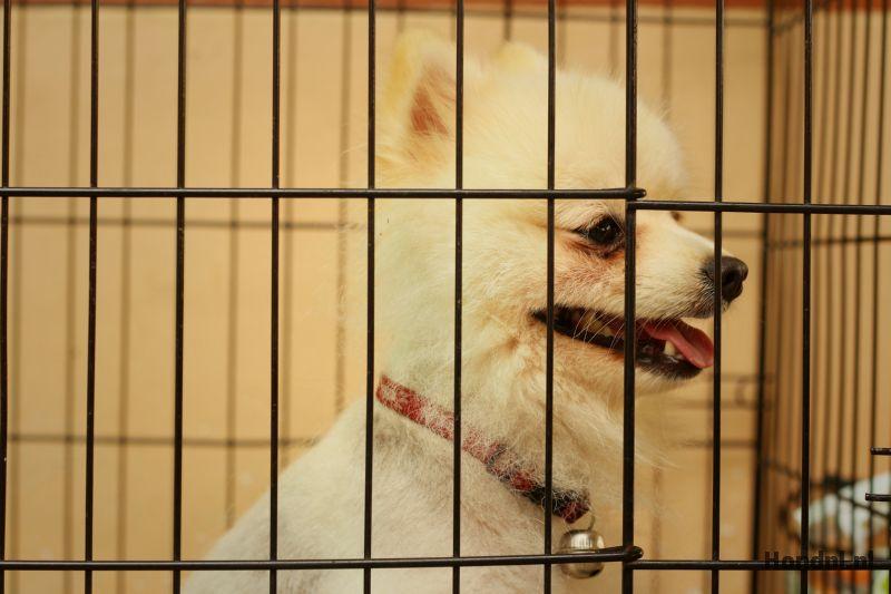 Hondenhotel hond in bench