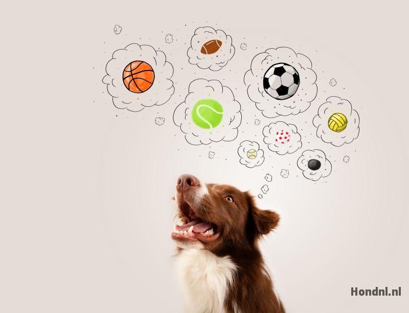 Hond denkspel