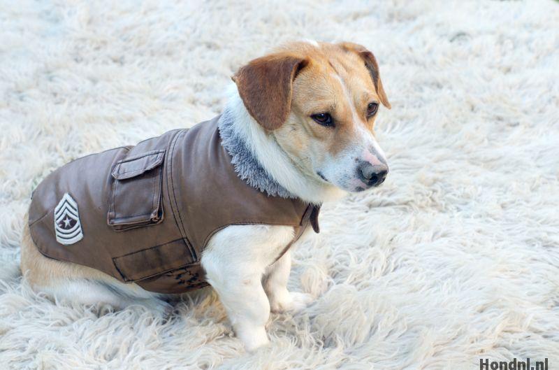 Hond winterjas