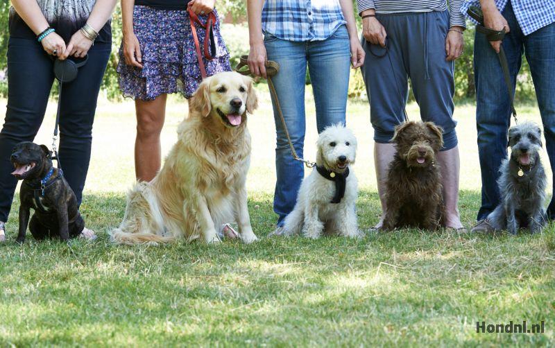 Hondencursus groep honden