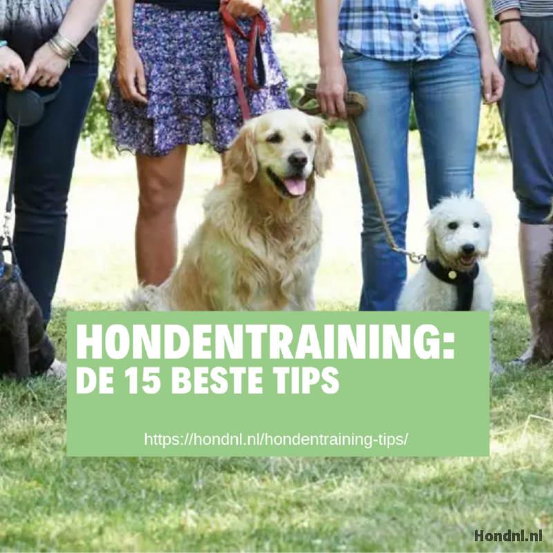 Hondentraining beste tips
