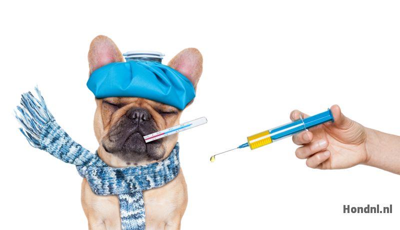 Vaccinatie kennelhoest hond