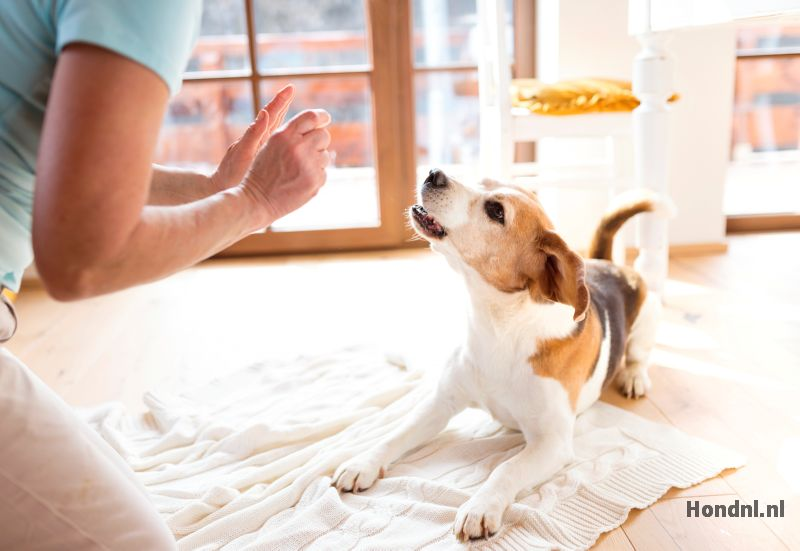 Hond niet straffen binnen plassen