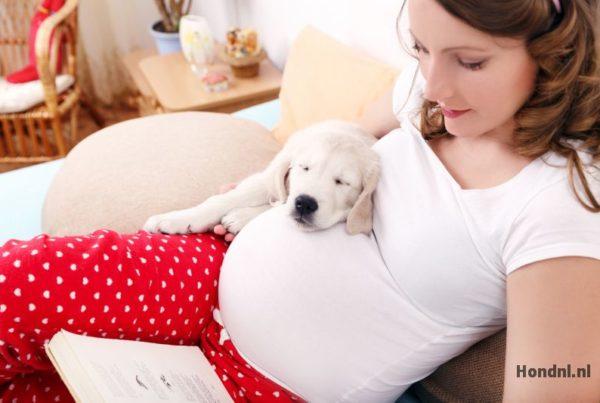 Hond tijdens zwangerschap