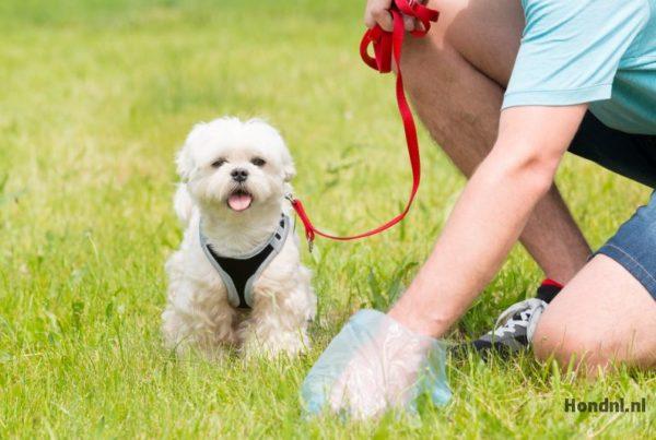 Hondenpoep opruimen