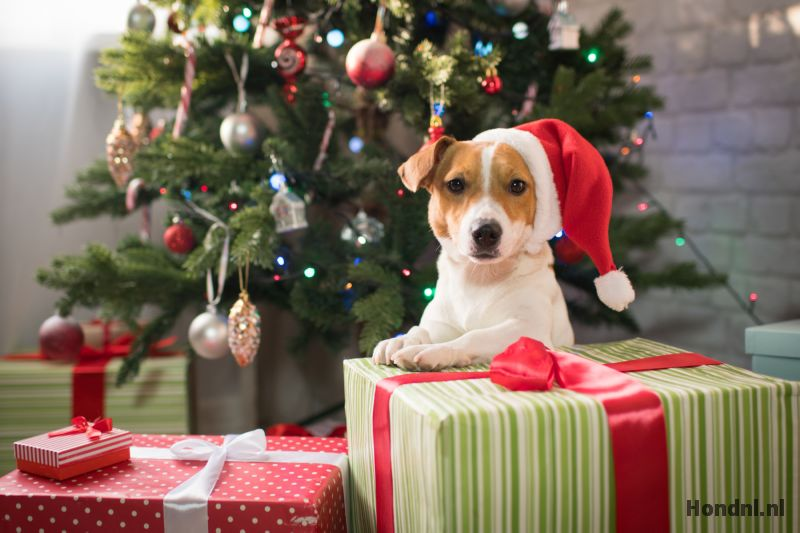 Cadeau hond sinterklaas kerst