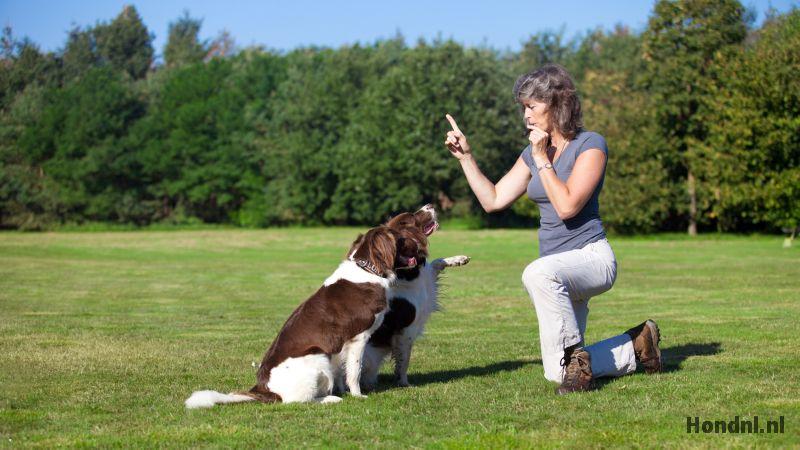Hond kunstjes leren fluit